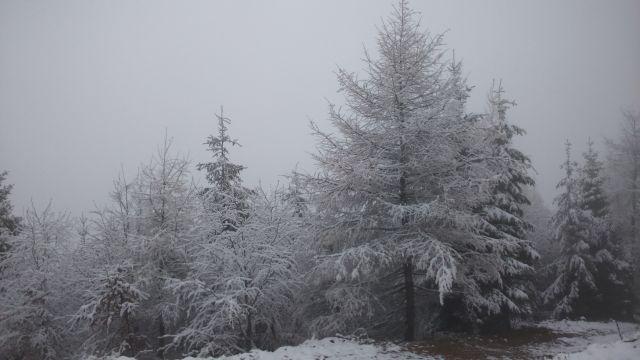 Początek zimy - listopad 2015